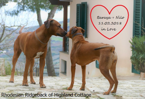 Baraya Princess of Highland Cottage und Shona out of Africa Niemann Nilo
